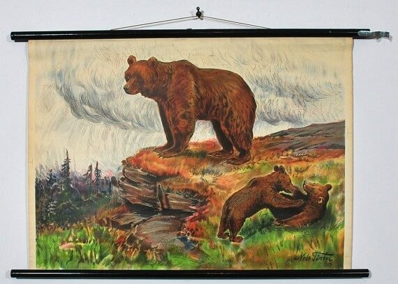cropped Vintage chart Bear and cubs
